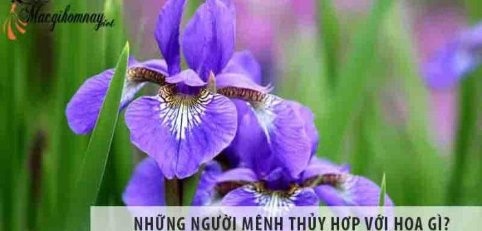 Những người mệnh Thủy hợp với hoa gì?