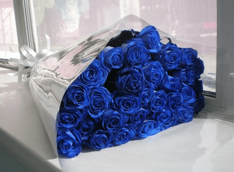 Hoa hồng xanh hiếm thấy